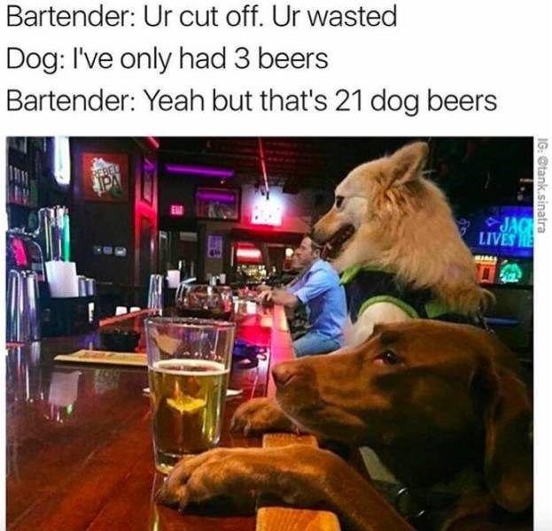 Diese Memes haben eine unglaublich niedrige Alkoholtoleranz (58 Memes)