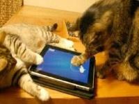 Animali geek: 10 video divertenti di cani e gatti (e non solo) alle prese con i videogiochi