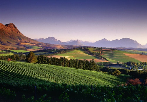The view from Warwick Wine Estate.