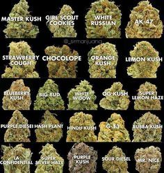 Marijuana strains online at http://www.cannabisonlinedispensary.net/