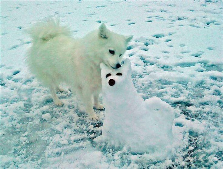 snø | Hunden Thea fikk tvilling av snø - Bergens Tidende