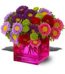 matsumoto aster - colorful centerpiece