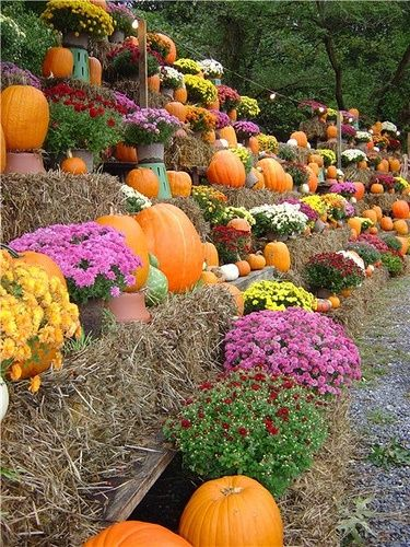 Decorating with Mums and Pumpkins | Tiered pumpkin and mum display | Fall Decor