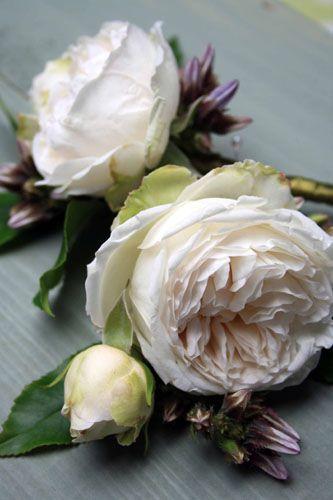 White Garden Rose Boutonnieres