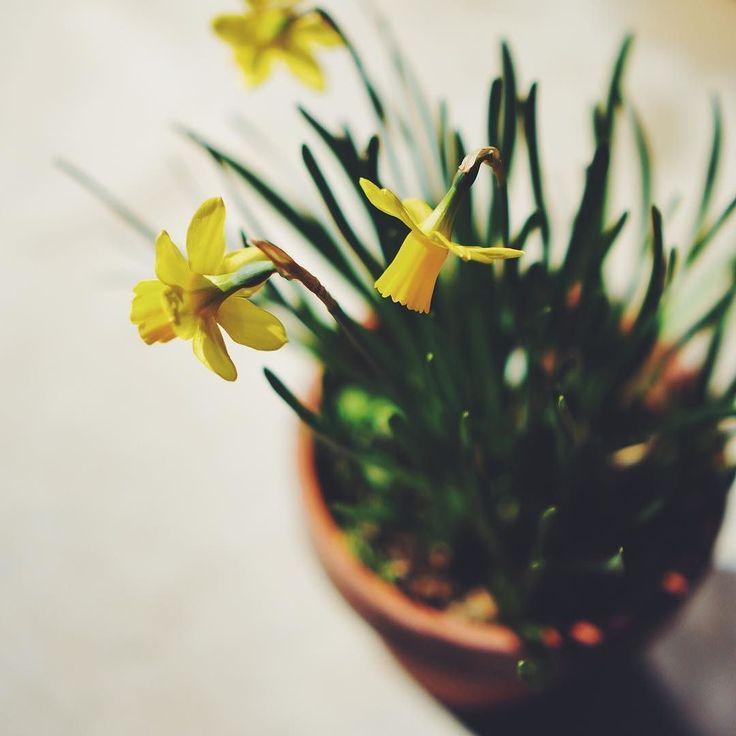 春ですね今日は陽射しがあり青空も垣間見られますお花も陽射しが嬉しそうでした #vscocam #vscom #vscogram #green #naturelovers #flower #flowers #緑 #春 #縁側 #spring #minimal #sonynex5 #鳥取 #鳥取県 #移住