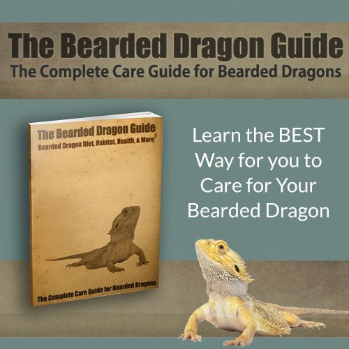 #BeardedDragon #HowTo The complete care guide for Bearded Dragons! http://952f4b1cwjqptjw3x0r9-38dsd.hop.clickbank.net/