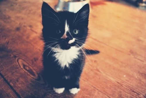 my cat, Jazzie!: Animal Lovers, Take Pictures, Black And White, Inspiration Pictures, Crazy Cat, Little Animal, Cute Kittens, Felin Purrfect, White Cat