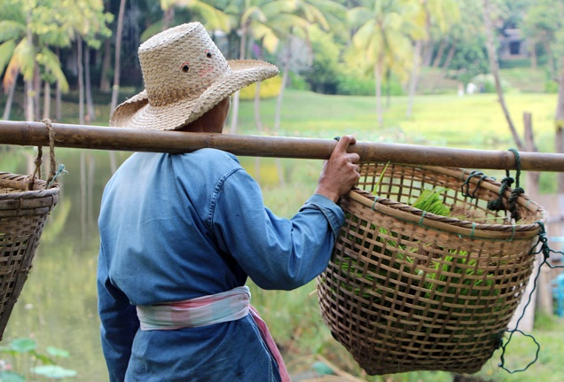 The #rice planters at Four Seasons Resort Chiang Mai show me how it's done. #FSChiangMai #Pinspiration