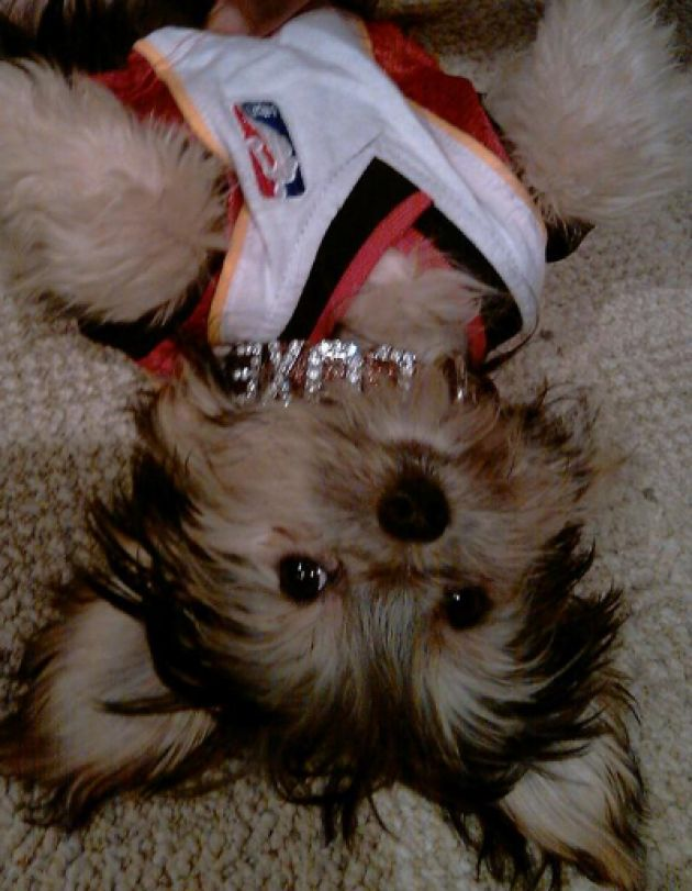 ugh this necklace is so heavy10 Dogs, Sports Lebronjam, Medium Dogs, Hate Sports