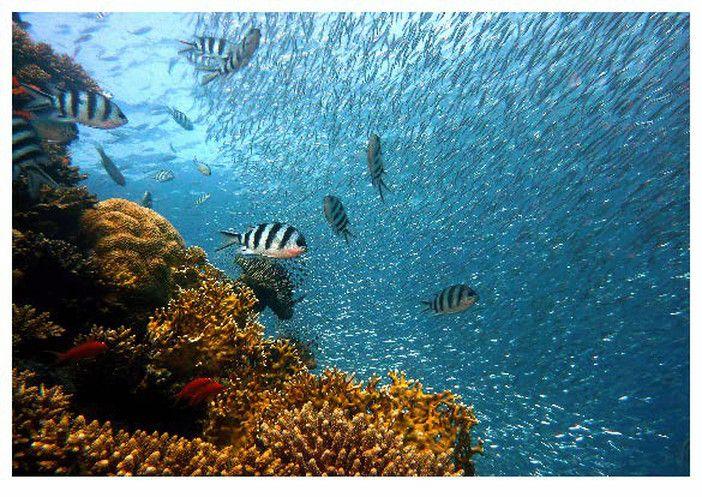 photograph regarding Diorama Backgrounds Free Printable titled ocean diorama backgrounds Nathan job Ocean diorama