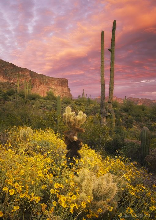 Sonoran Romance by ~PeterJCoskun on deviantART