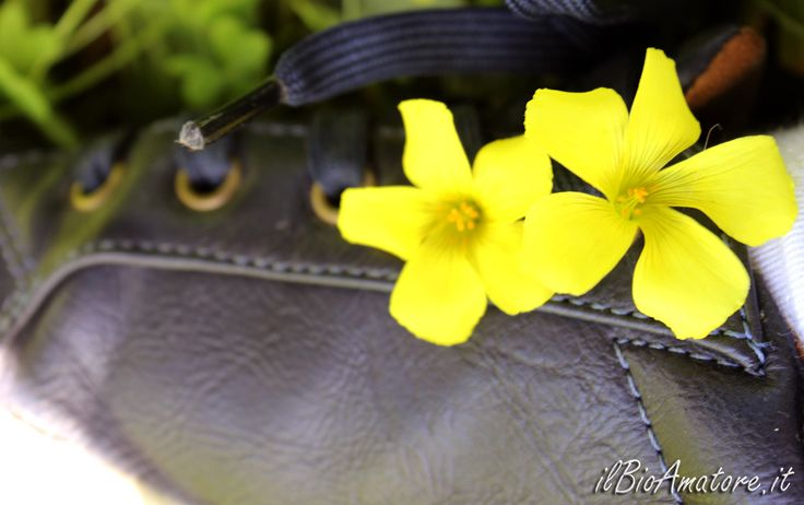 mettete dei fiori nei vostri scarponi, fiori, scarpe, acetosella gialla
