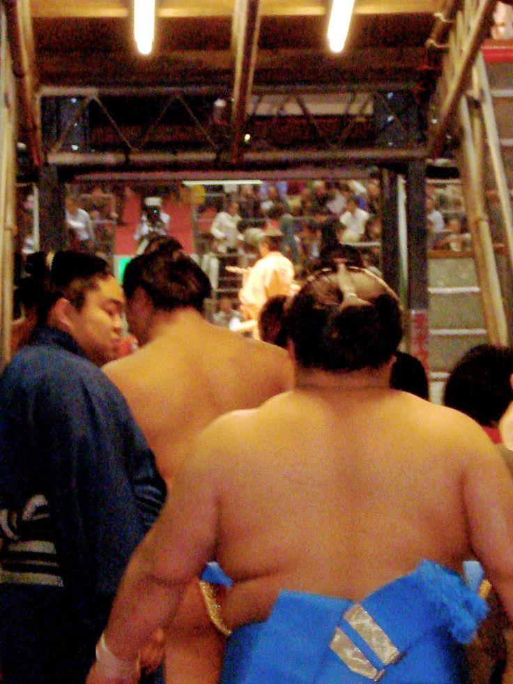 DAILYHAIKU                                  di susanna tartaro: Sumo