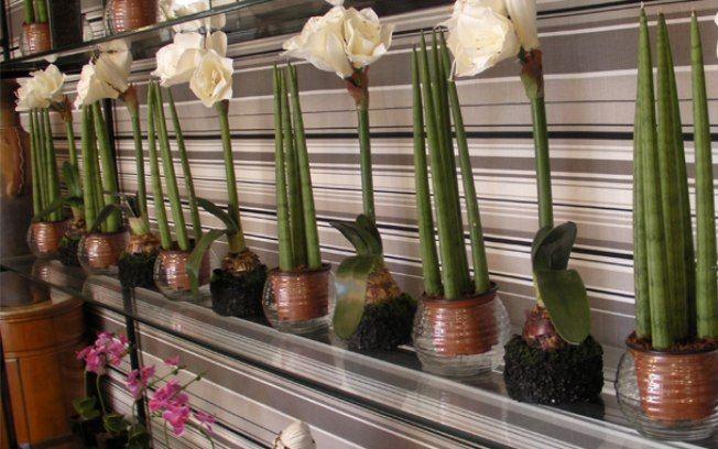 A floricultura assinada por Paulo Gazola tinha arranjos com espada-de-São-Jorge e amarilis na Casa Cor SP. Foto: Bruna Bessi, iG São Paulo