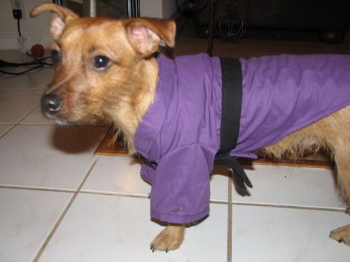 master splinter dog costume