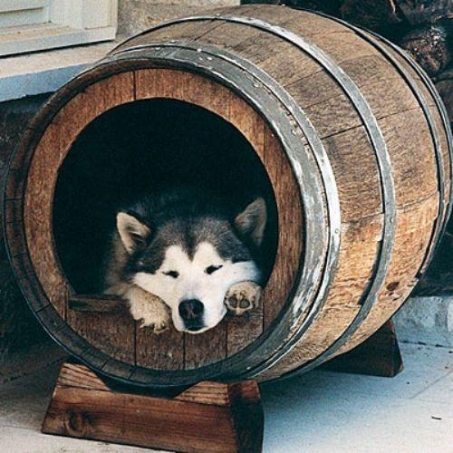 un tonneau recyclé en niche pour chien