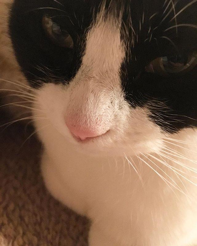 マリンのアップでこんにちは☆ 新丸ビルに来ております。 * 今からお友達とランチ♡ わくわく。 * ************************** #伊藤家ニャンズ #猫のいる暮らし #猫変態 #猫 #保護猫 #ねこ #ネコ  #ハチワレ #はちわれ #にゃんこ #ペコねこ部 #モフモフ #多頭飼い #白黒猫 #愛猫 #ペット #にゃび #ふわもこ部 #cat #cats #cute #catsofinstagram #pets #kitty #catslover #neko #nekostagram #catsagram