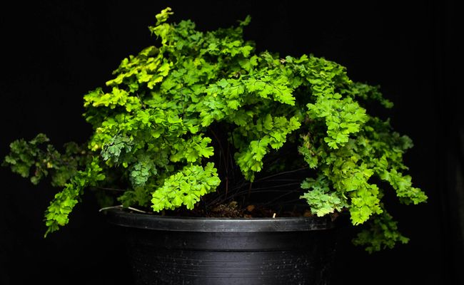 Plants For Dark Rooms Http Www Care2 Com Greenliving 7