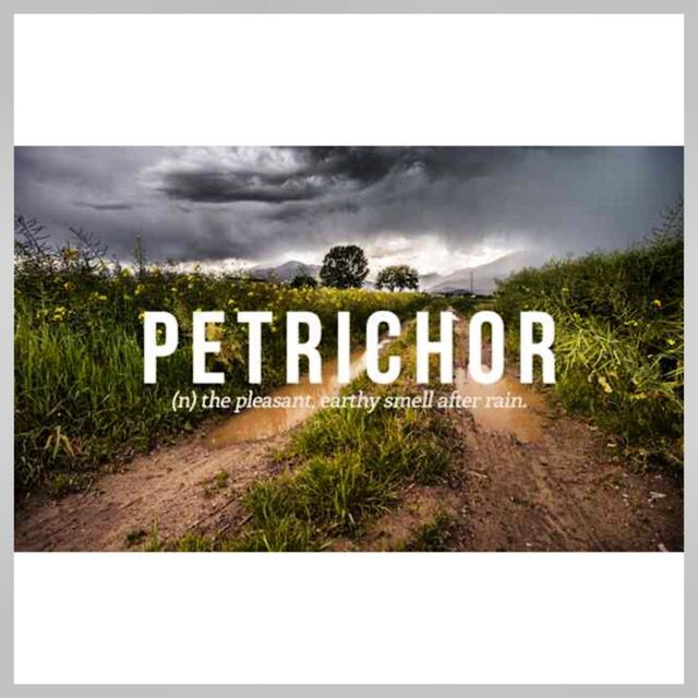 "Our #WordOfTheDay this beautiful #sunny Wednesday is #PETRICHOR meaning; A pleasant smell that frequently accompanies the first #rain after a long period of warm, dry #weather.  Example - ""Other than the petrichor emanating from the rapidly drying grass, there was not a trace of evidence that it had rained at all"" #BeautifulWords #Words #Wordsmith #copywriting #copywriter #writing #writinginspiration #writersofinstagram #writerswednesday #writingwednesday #wednesdaywords #wordsofinstagram…"