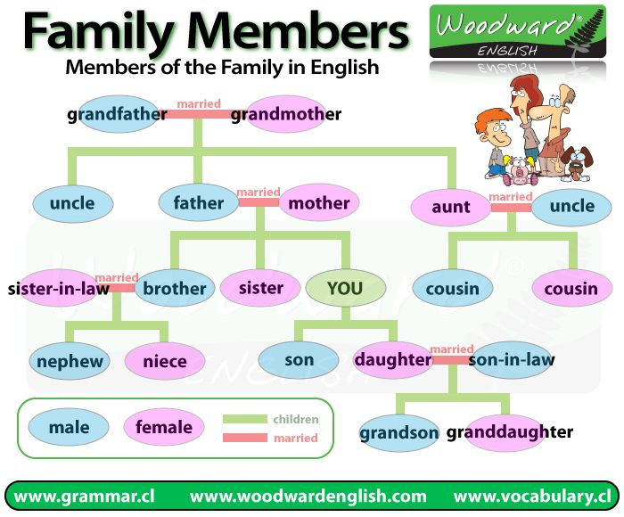 Family members in English #learnenglish