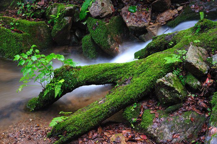 산림문화작품공모전 입선/박준철(태고의 신비) ※ 본 저작물의 무단전제 및 재배포를 금합니다. copyright ⓒ 2013 by 산림청(Korea Forest Service) All pictures can not be copied without permission.