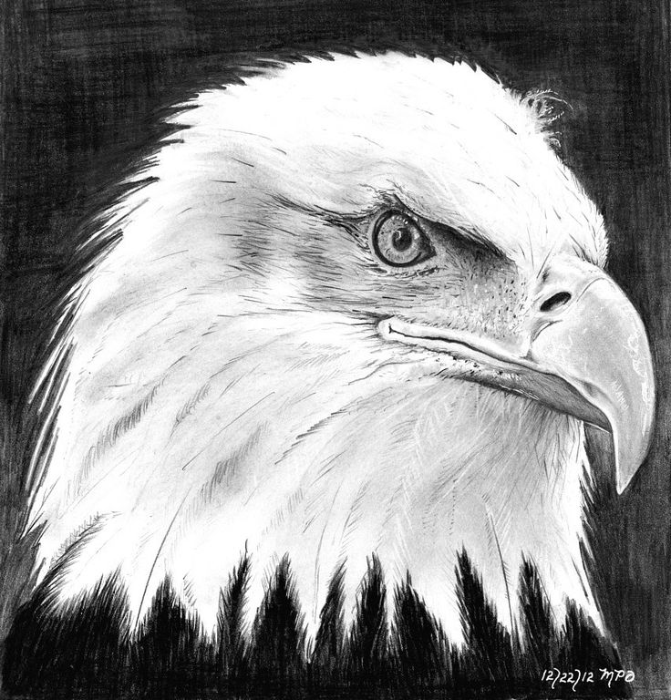 345 best EAGLE- DRAWING AND PAINTING images on Pinterest | Eagle ...