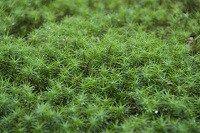苔園芸初心者におすすめの苔の種類 7選! | 苔園芸の情報サイト〜苔日和 (こけびより)