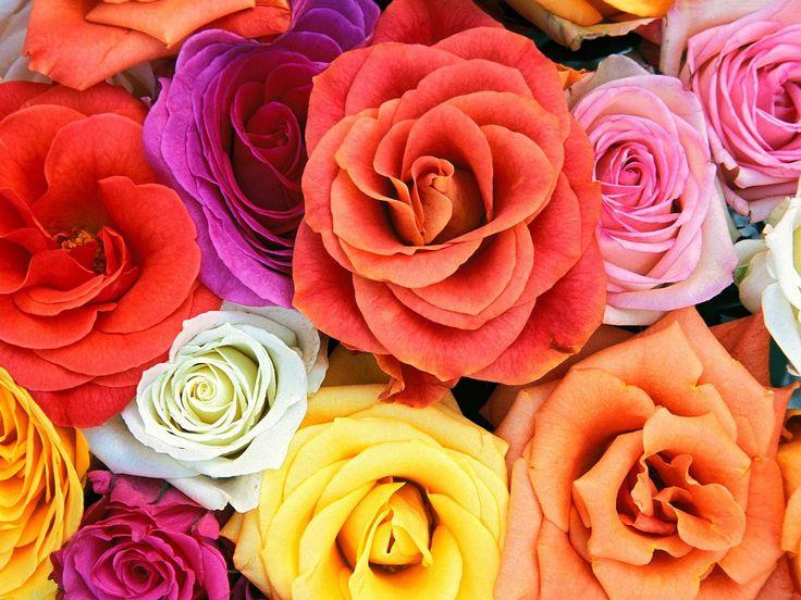 Flower Walpaper - http://whatstrendingonline.com/flower-walpaper/