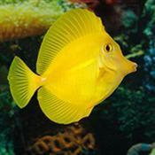 Live Aquarium Fish for Sale Online | PetSolutions