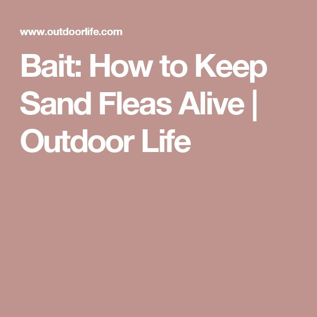 Bait: How to Keep Sand Fleas Alive | Outdoor Life
