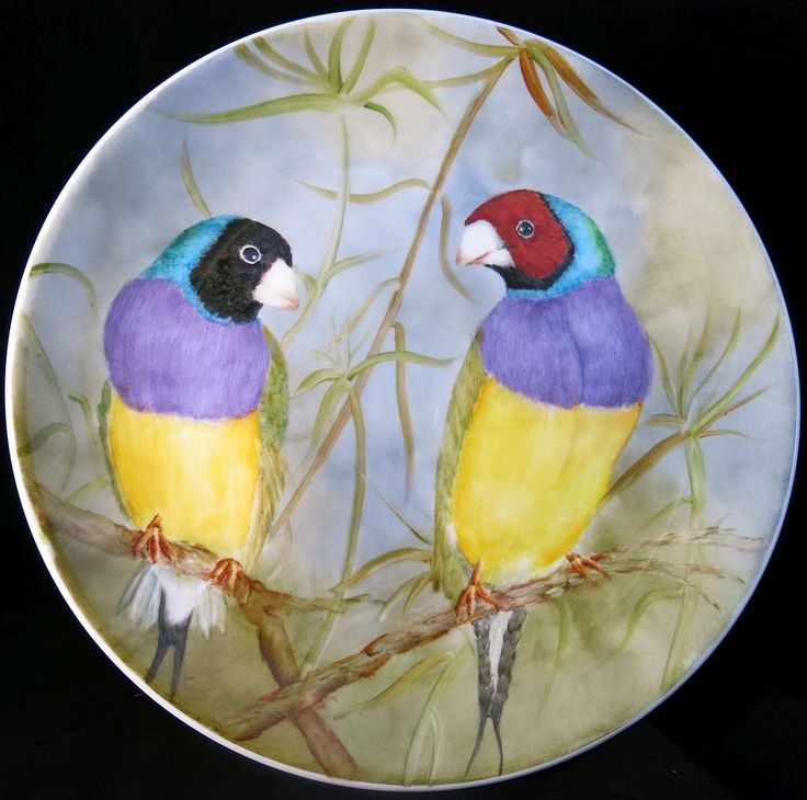 Brownwhyn Smith - Gouldian Finches - Plate - 2015 - 'Birds, beasts and beauty', 16 April – 10 May 2015, Strathnairn Arts