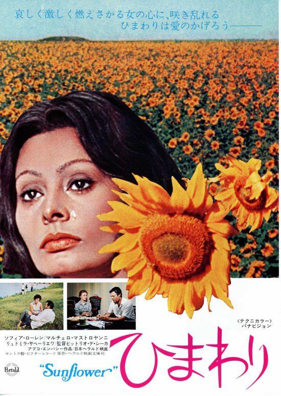 I Girasoli,1970   Sunflower   ひまわり