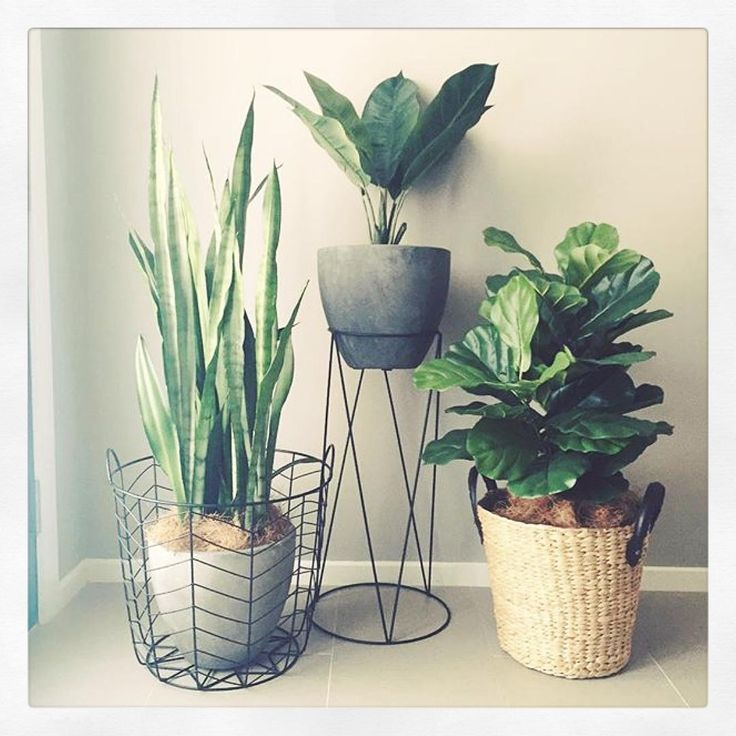 """Really loving this indoor #garden @creative.spaces.by.chloe has created beautifully by using all things Kmart except the 2 outer plants. Looks perfect…"""