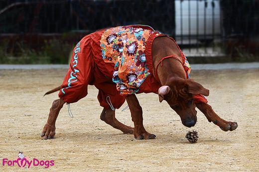 Salopeta de Ploaie pentru Caini Rase Medii & Mari --> https://kingmaru.ro/…/Salopeta-de-ploaie-cu-flori-pentru-ca… Rase Mici --> https://kingmaru.ro/…/Salopeta-de-ploaie-cu-flori-pentru-ca…  Si nu uita! Transportul este GRATUIT pentru comenzile de peste 300 lei  #hainecaini #imbracamintecaini #accesoriicaini #kingmaru
