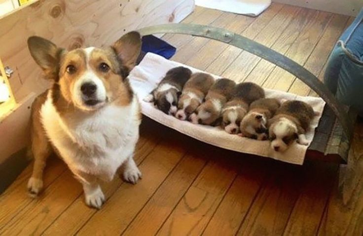 You'll never be as proud of your kids as these dogs are