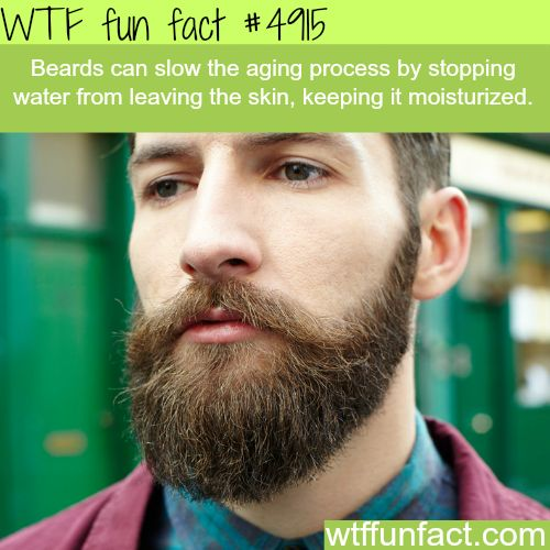 1000+ Beards Funny Quotes On Pinterest