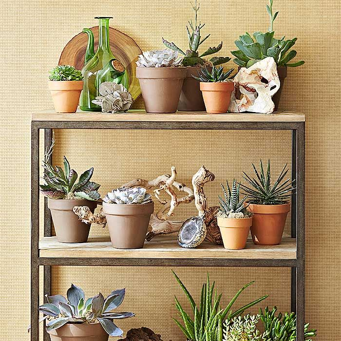 Succulents In Pots On A Plant Shelf... Love This Too