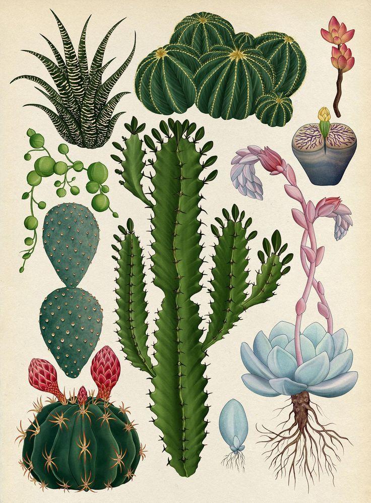 Die botanischen Zeichnungen von Katie Scott – #bot…