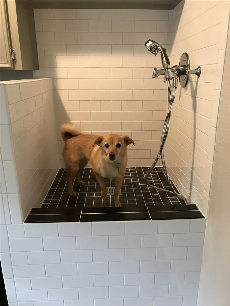 Best 25 Dog Shower Ideas On Pinterest Dog Washing