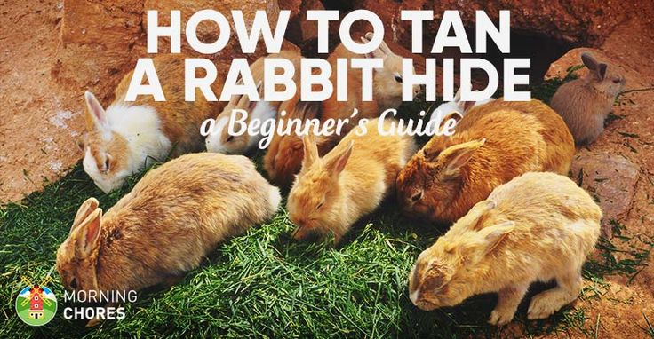 Are you raising rabbit and don't want to waste the skin and fur? Here's how to tan a rabbit hide and several ways to use them.