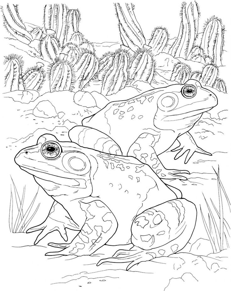 Printable Frog Coloring Pages in 2020 Frog coloring