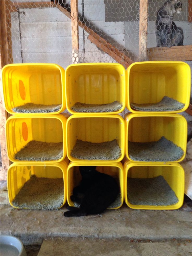 17 Best Recycled Tidy Cat Buckets Images On Pinterest