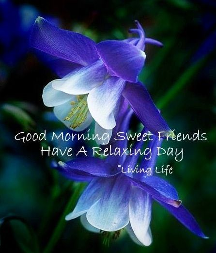 Good Morning Saturday Purple : Best images about daytime greetings on pinterest
