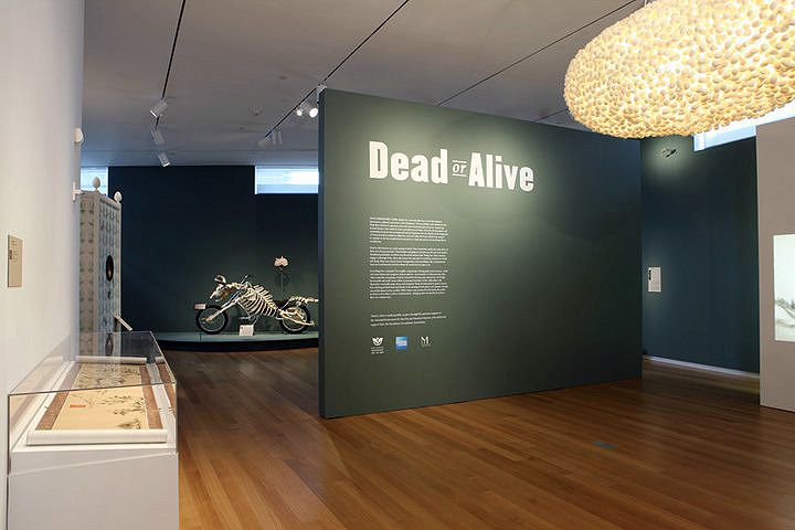 Eight thousend miles of home - exhibition piece for  DEAD OR ALIVE in the museum of arts and design in New York.