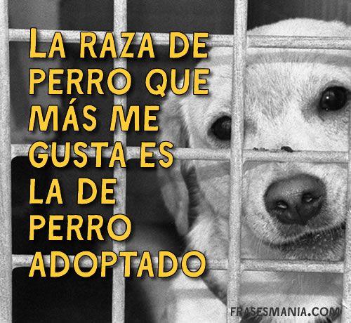 Adopta a un perro, te lo dará todo a cambio de nada.