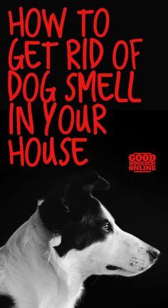 How To Get Rid Of Dog Smell In The House Dog Smells Dog Urine