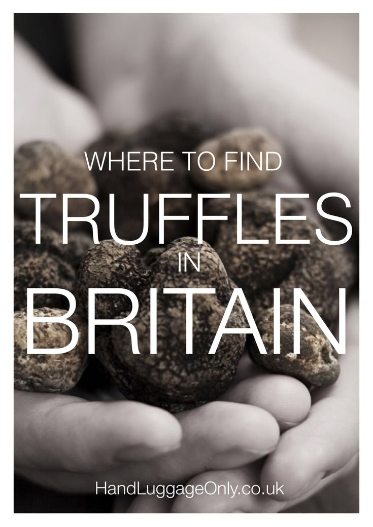 Everyday I'm Truffling: Where To Go Truffle Hunting In Britain - Hand Luggage Only - Travel, Food & Home Blog