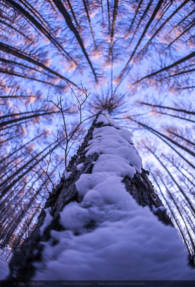 Wow! What a shot. #photography #perspective #trees | Via 500px, Flickr; photo credit SimonSun | pinned via @Arbor Day Foundation: