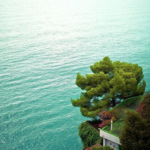Italy / Tree / Sea   Flickr - Photo Sharing!