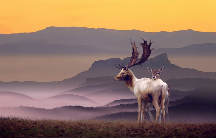 Deer Family In A Perfect Landscape // Photography By: Nikos Bantouvakis